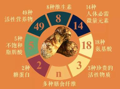 松茸的功效作用与营养价值