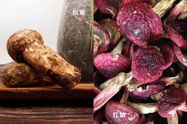 松茸和红菇哪个营养高,松茸贵还是红菇贵