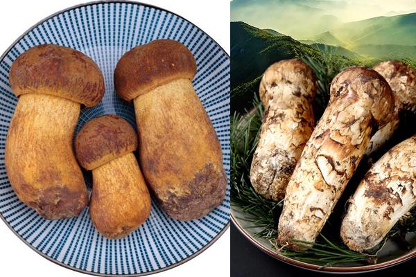 松茸可以和牛肝菌一起吃吗,怎么区分牛肝菌和松茸
